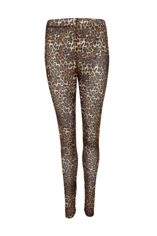 Black Colour Florence mesh legging leopard